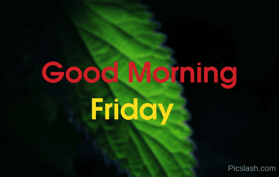 good morning friday flower images hd
