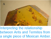 https://sciencythoughts.blogspot.com/2014/10/interpreting-relationship-between-ants.html