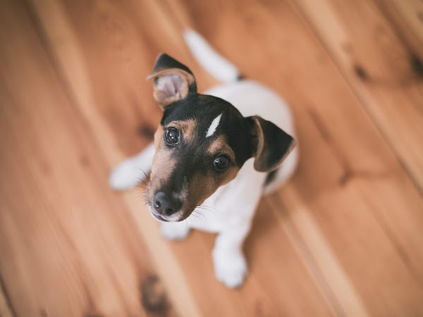 HOW TO CHOOSE THE RIGHT WOODEN FLOORS FOR HOMES WITH CHILDREN AND PETS?