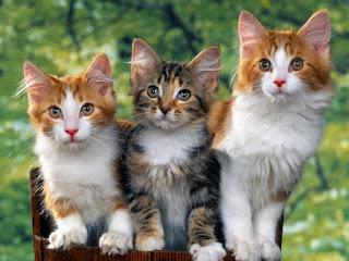 Kucing | Hewan yang Dipercaya Bisa Melihat Hantu