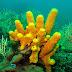 Эмират Фуджейра строит самый большой коралловый риф