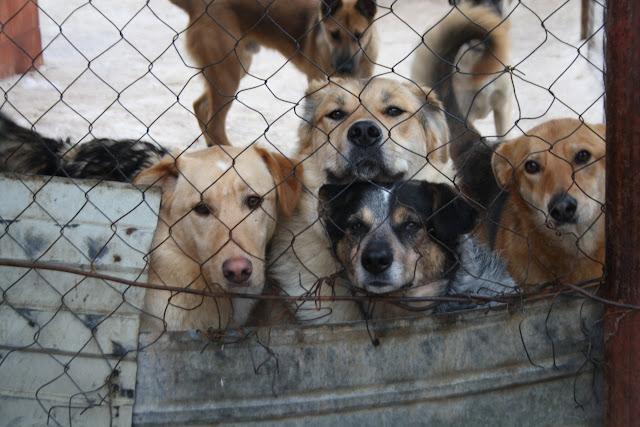 """Собачий приют в Севастополе стал """"концлагерем для животных""""! Вместе с живыми лежат мертвые животные..."""