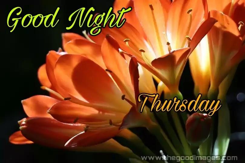 Good Night Thursday Flower