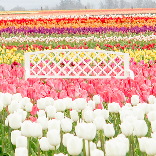 Wooden Shoe Tulip Farm | LLK-C.com