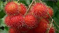 gambar buah rambutan, bahasa arab buah rambutan