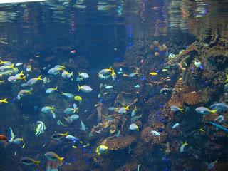 vasca con pesci colorati
