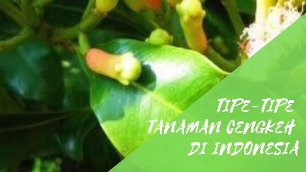 Tipe-Tipe Tanaman Cengkeh