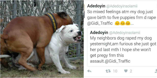 Dog who was raped by next door neighbor dog gives births........