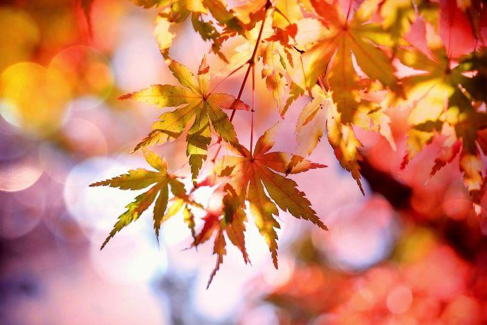 mjesečni-horoskop-jesen-oktobar