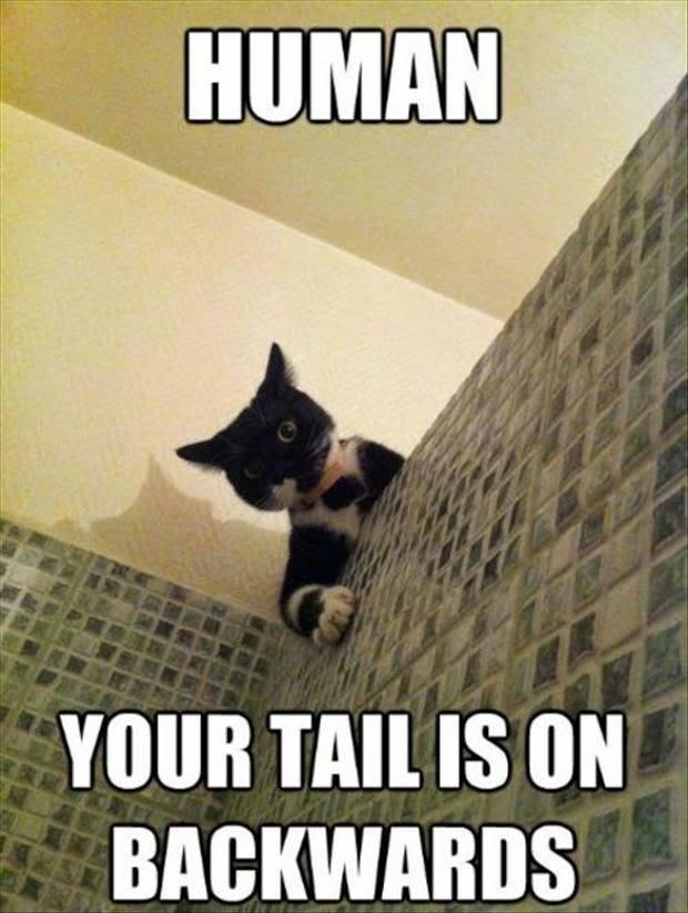 Funny Cat Shower Human Backwards Tail Joke Picture Meme