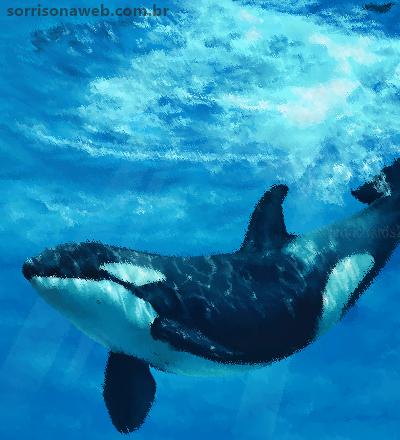 Curiosidades sobre a Baleia Orca - Sorriso na Web