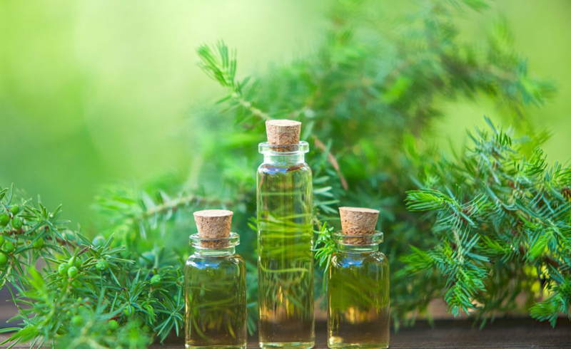 How to Use Tea Tree Oil for Hair Health