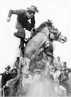 sela montaria em cavalos