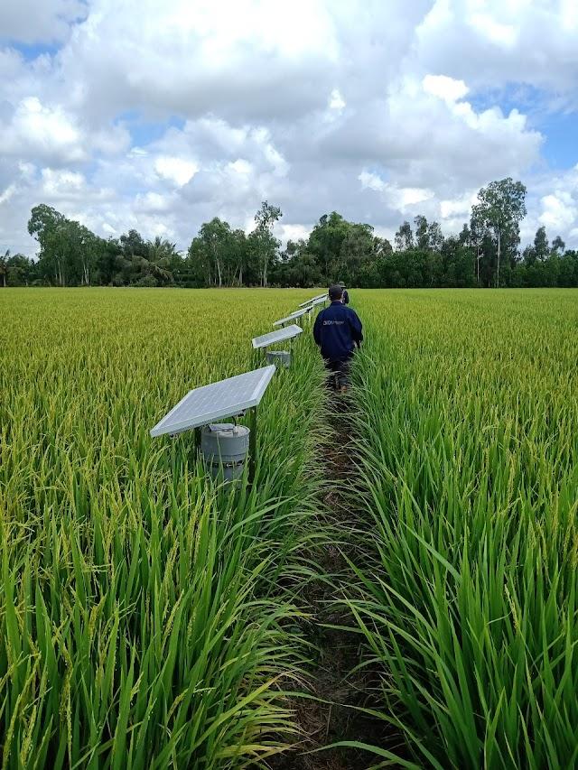 MINH SÁNG cung cấp hệ thống trồng lúa công nghệ cao tại tỉnh Tiền Giang