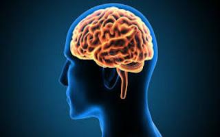 Cérebro ou celebro? Qual a diferença?
