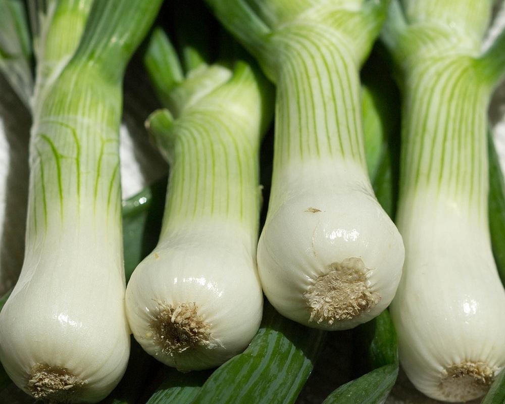 Scallions, Spring Onions