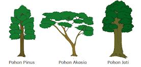 Pohon jati, pinus, akasia