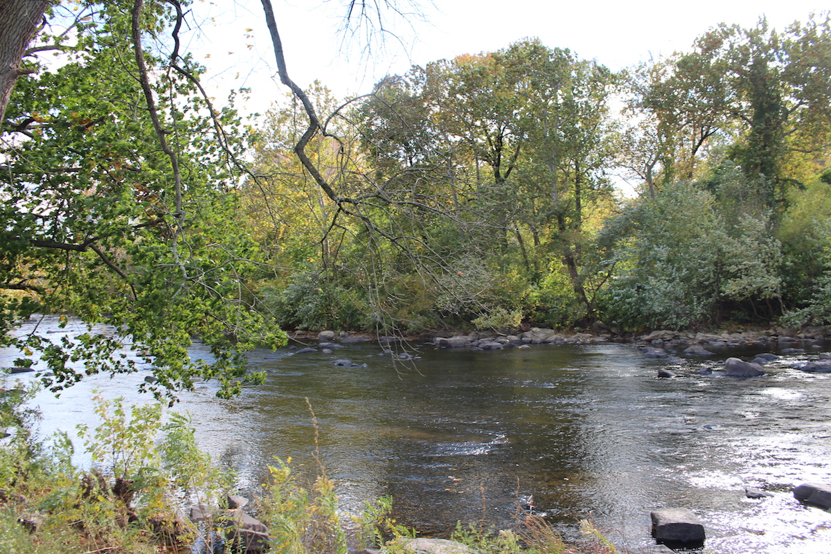 This is a beautiful photo of Brandywine Park, with the trees close up and the river in the background.