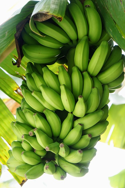 health-benefit-of-banana