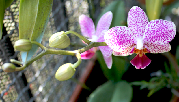 Como cuidar de orquídeas depois de sair a flor
