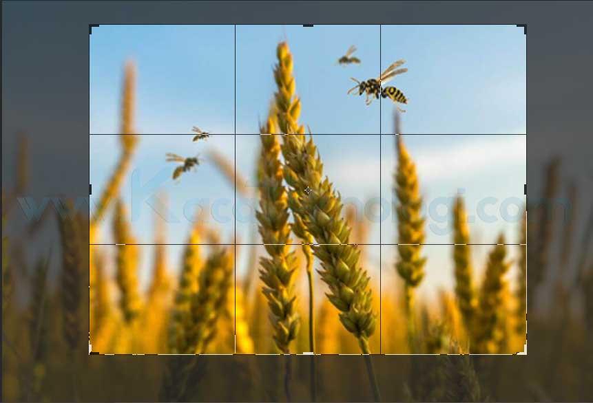 Cara Cepat Memotong Gambar di Photoshop Menggunakan Crop ...