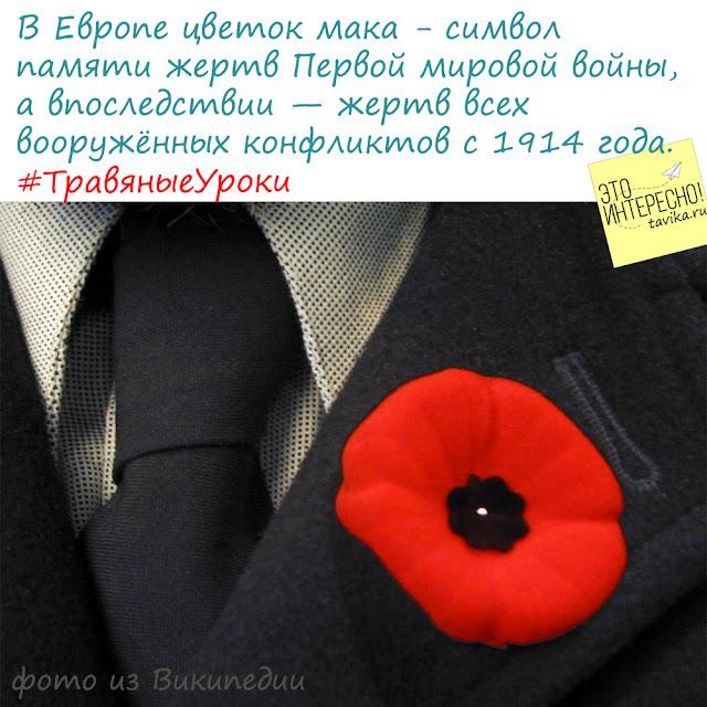 Мак - символ скорби о погибших во время Первой мировой войны