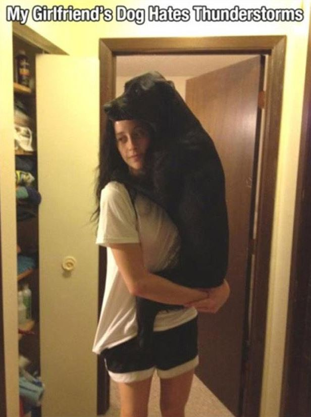 17 Hilarious Problems Dog Owners Will Relate To - They're so cute when they are afraid.