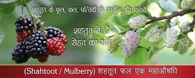 स्वास्थ्यवर्धक पौष्टिक शहतूत Healthy Nutritional Shahtoot in Hindi
