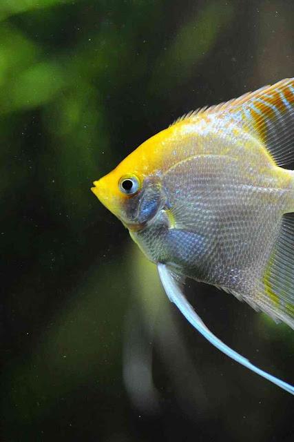 افضل صور سمك في العالم 2020 ، صور احواض سمك ، خلفيات اسماك متحركة hd