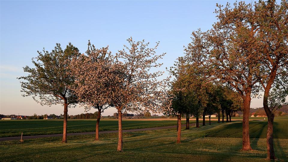 alberi-sempreverdi-frutteto-giardino