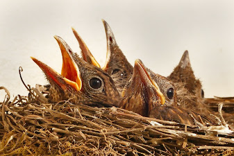 Bird Linguistics