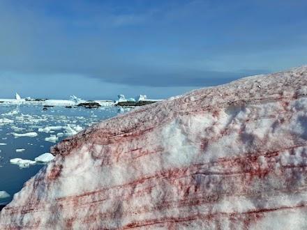 Κόκκινο βάφτηκε το χιόνι στην Ανταρκτική