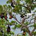 SÉNÉGAL : l'État étudie la piste des drones pour la sécurité de ses parcs nationaux