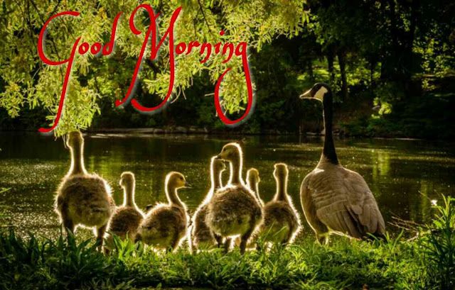 Beautiful birds good morning images