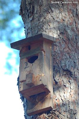 Caixa niu per a ratpenats foradada per un picot, a Pratdip