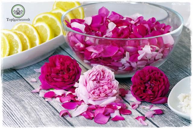 Rosenblütensirup aus Duftrosen selber machen - Foodblog Topfgartenwelt