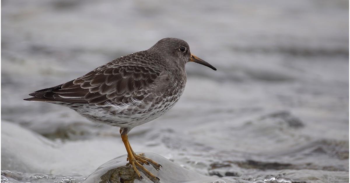 Птицы краснодарского края фото и описание
