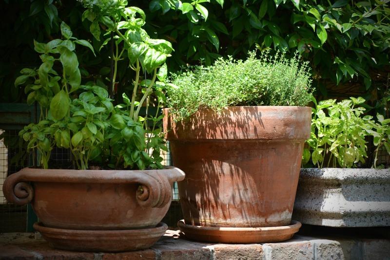 Plantas aromáticas en contenedores