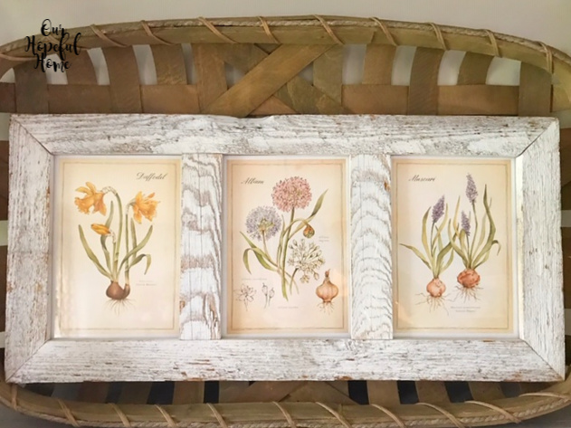 daffodil allium hyacinth bulbs vintage botanical prints