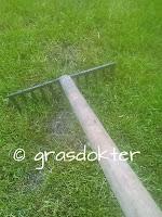 gras harken