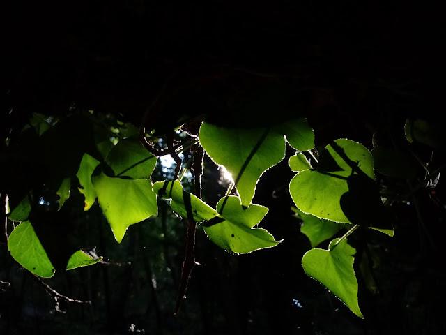 mattino (dentro il bosco)