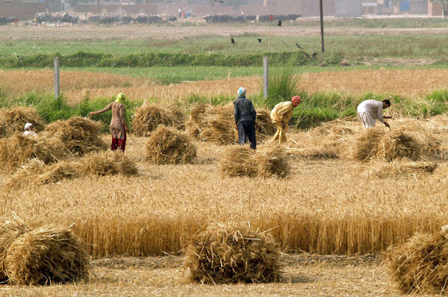 The neglected agricultural sector of Pakistan.
