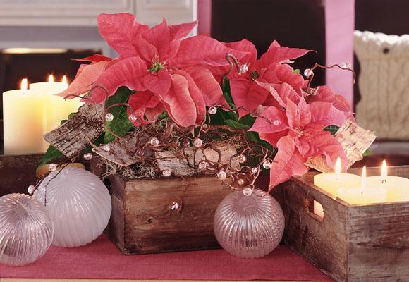 centro de mesa con flores naturales de nochebuena