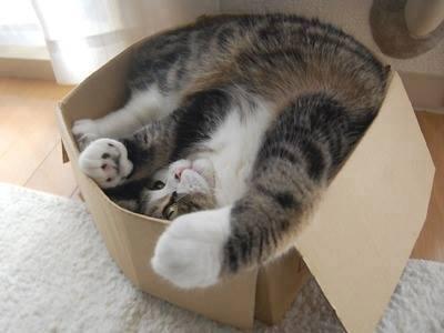 Cats humor #8