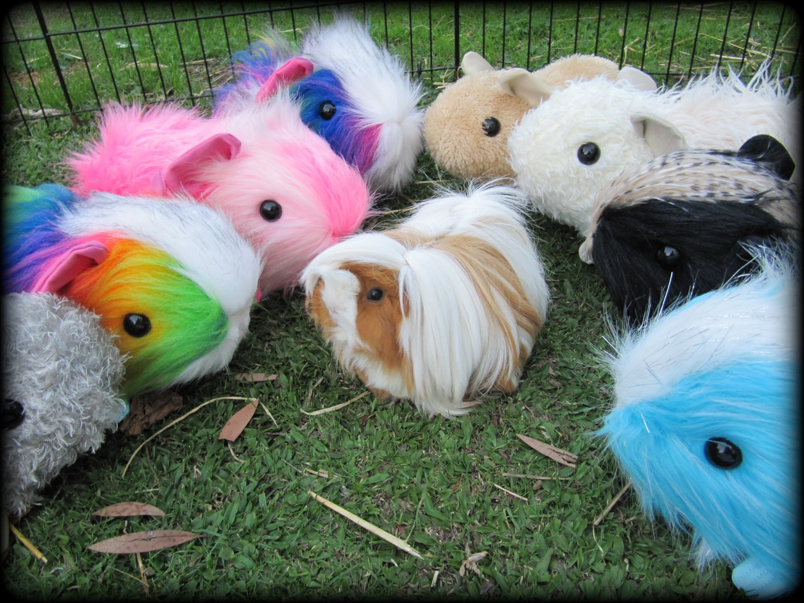 All Things Guinea Pig: Guinea Pig Toy PATTERNS - make your own