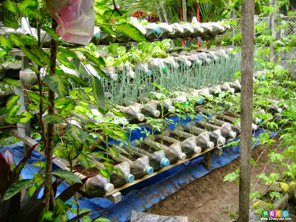 The Best In Internet Gardening Ideas For Beginners