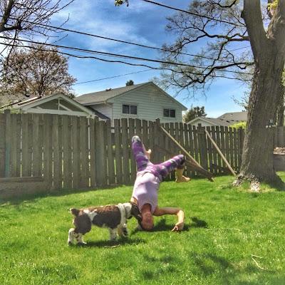 Image Result For Dog Training Mat