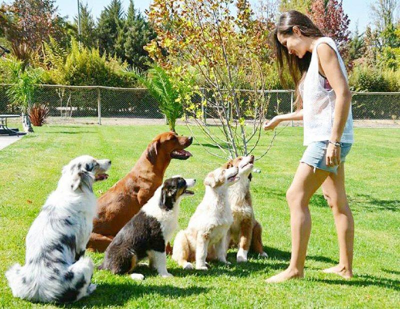 Francini cuenta cómo entrena a 3 cachorros en el patio de la casa