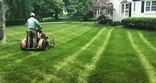 Basic Lawn Care Tips, lawn care for dummies,lawn care basics,basic lawncare,basic lawn care,caring for lawn,lawn care information,how to do lawn care,proper lawn care,basic yard maintenance,basic lawn maintenance