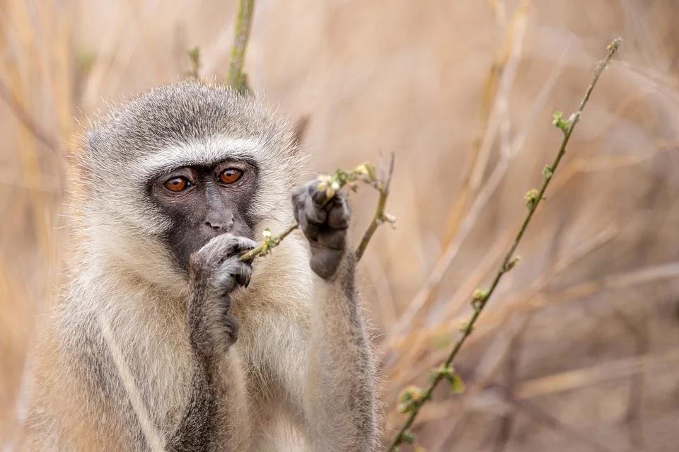 گھر میں سوئی دونوزائیدہ بہنوں کو بندر لے گئے.